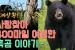 리얼실화~ 사랑찾아 400마일 여행한 흑곰 이야기